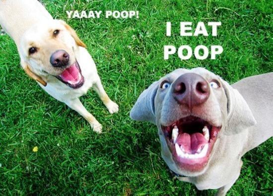 Dogs Love Poop