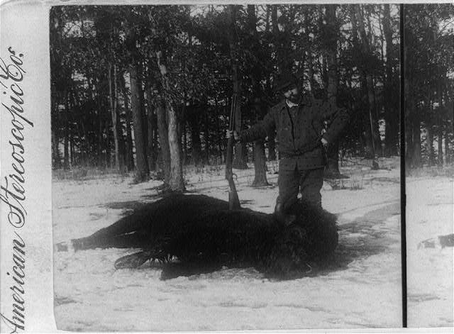 Bison Body Snow