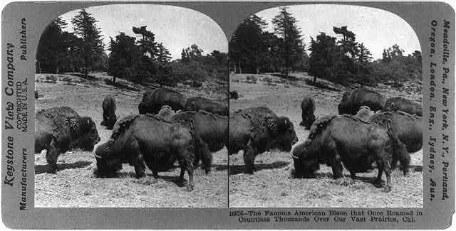 Bison Trees