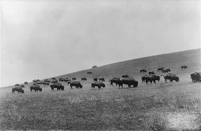Hillside Herd