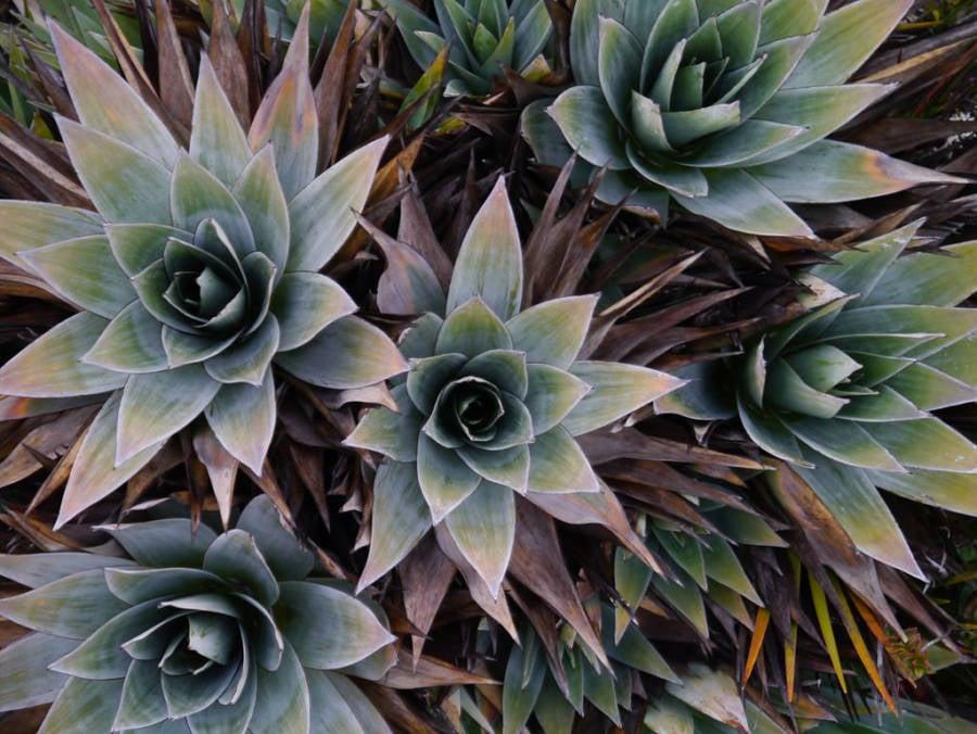 Roraima Plants