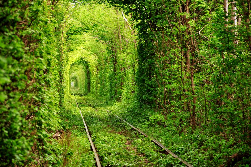 The Tunnel of Trees in Rivne Ukraine
