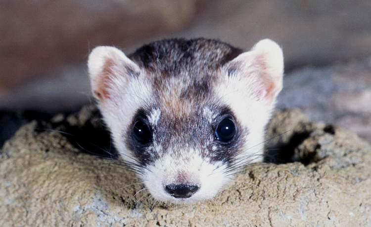 The 7 Cutest Animals Y...