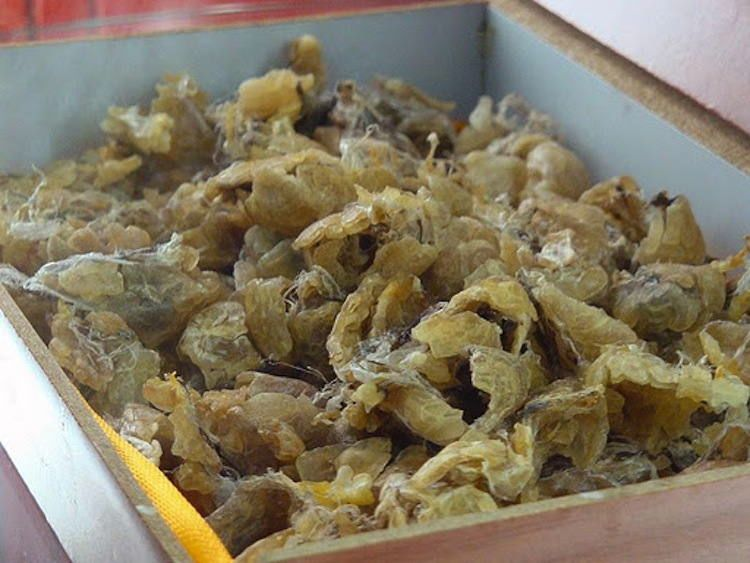 Chinese Frog Food