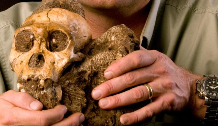 Human Ancestor Skull in South Africa