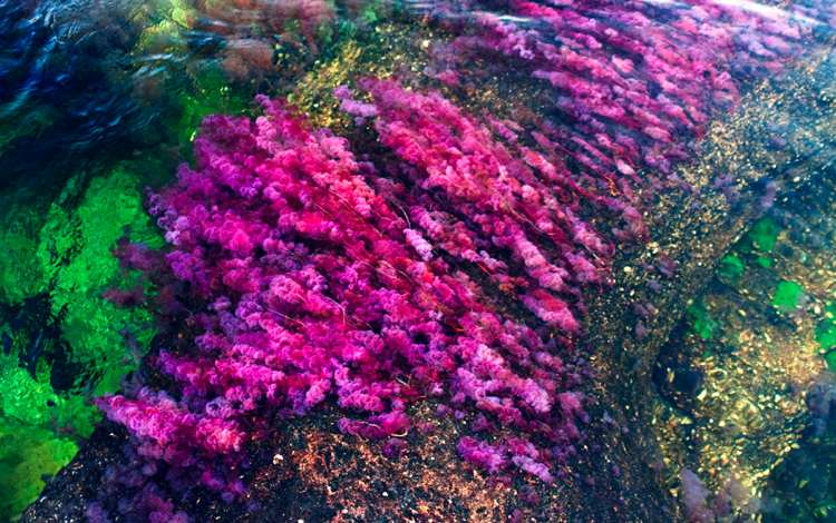 Caño Cristales Picture