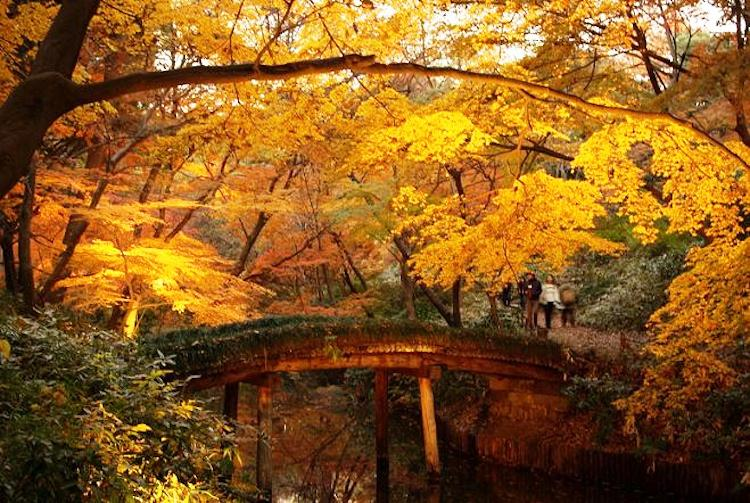 The Worlds Five Most Beautiful Gardens