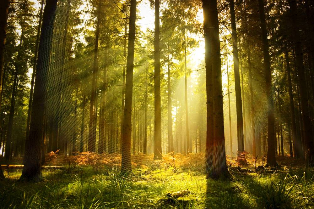 woodlands norway