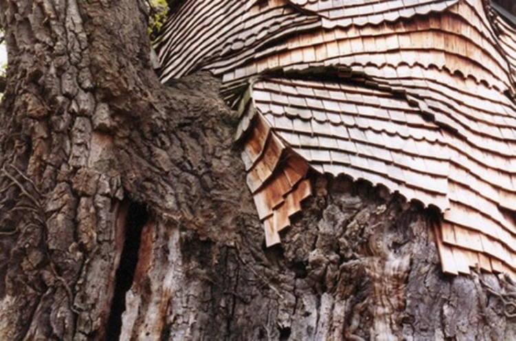 Incredible Oak Chapel
