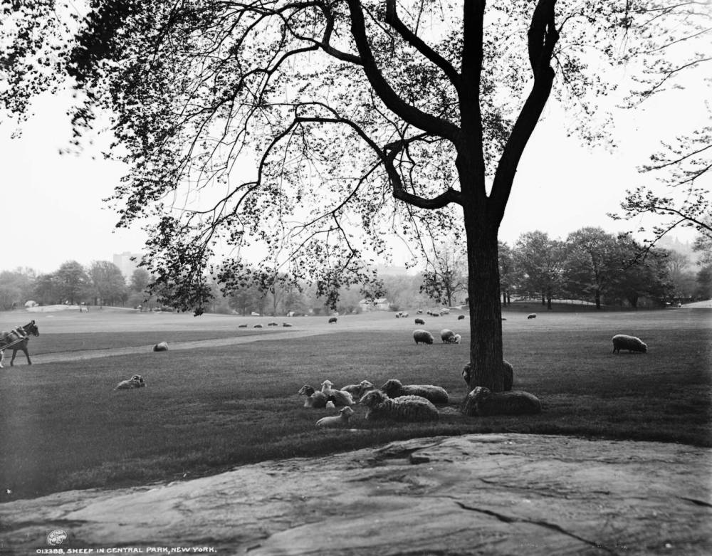 Sheep Meadow 1906 Central Park