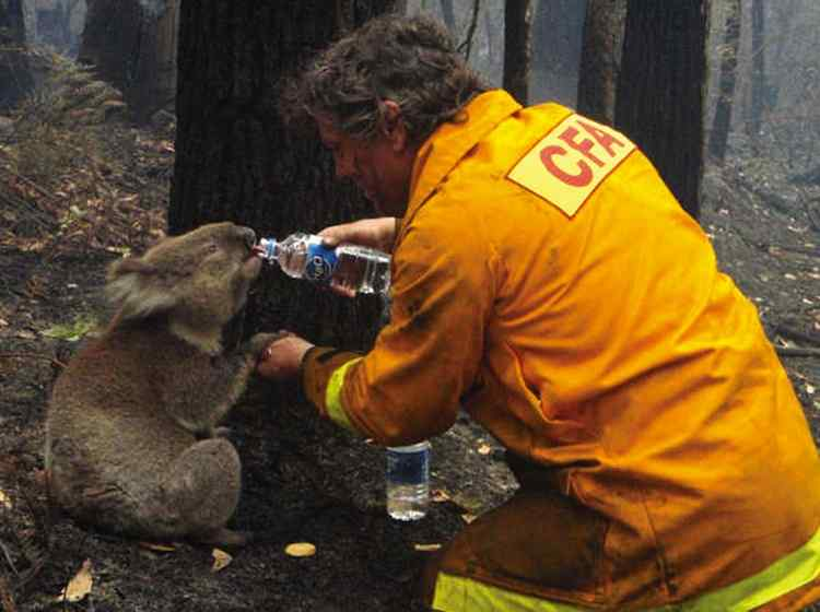 iconic-images-2000s-black-friday-bushfires