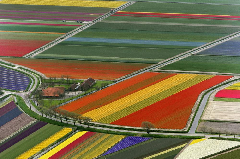 Netherlands Technicolor Tulip Fields Photograph