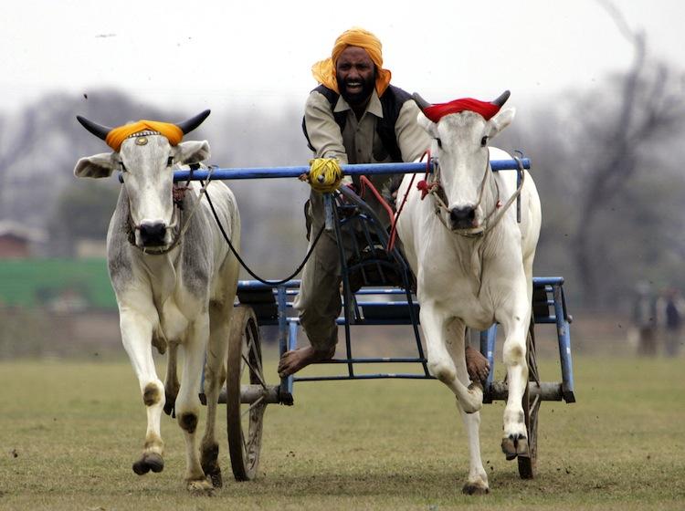 indias-rural-olympics12