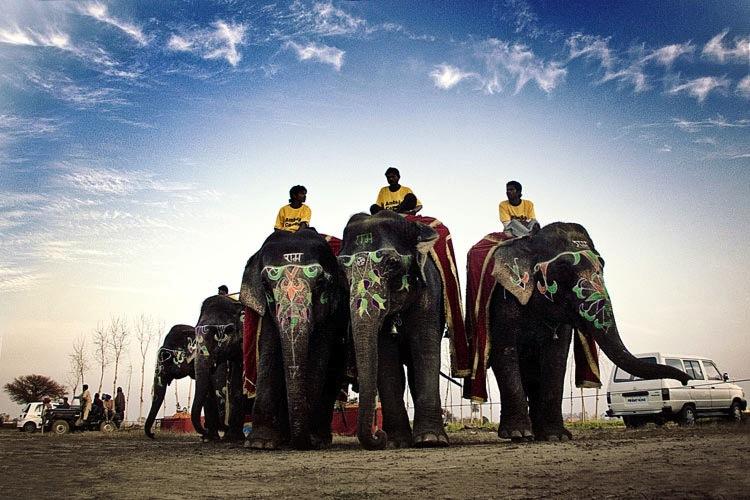 indias-rural-olympics6