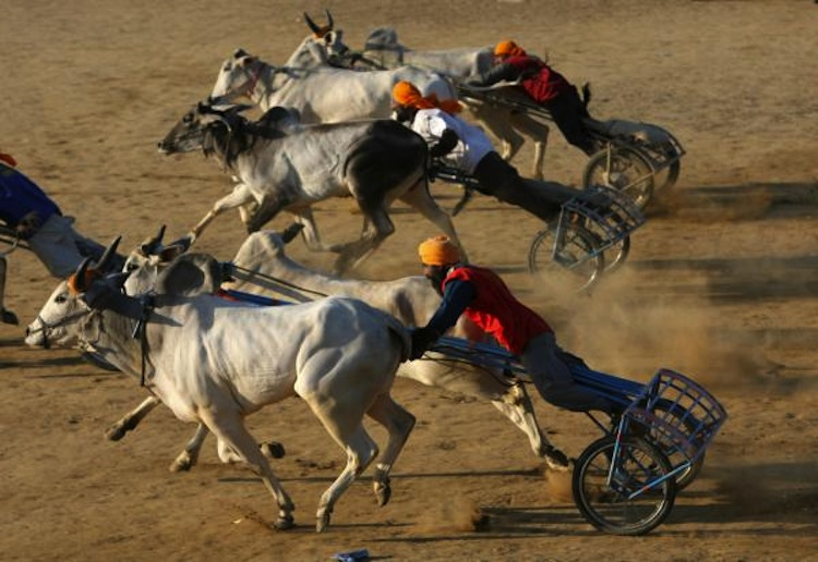 indias-rural-olympics9