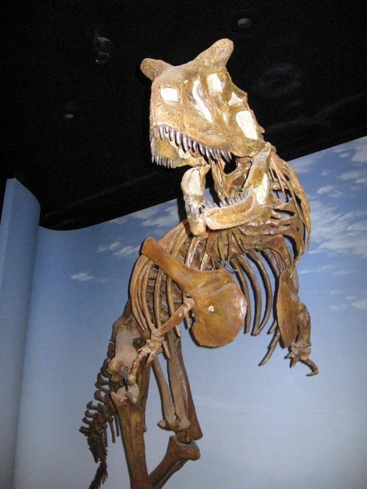 Weird Dinosaurs Carnotaurus
