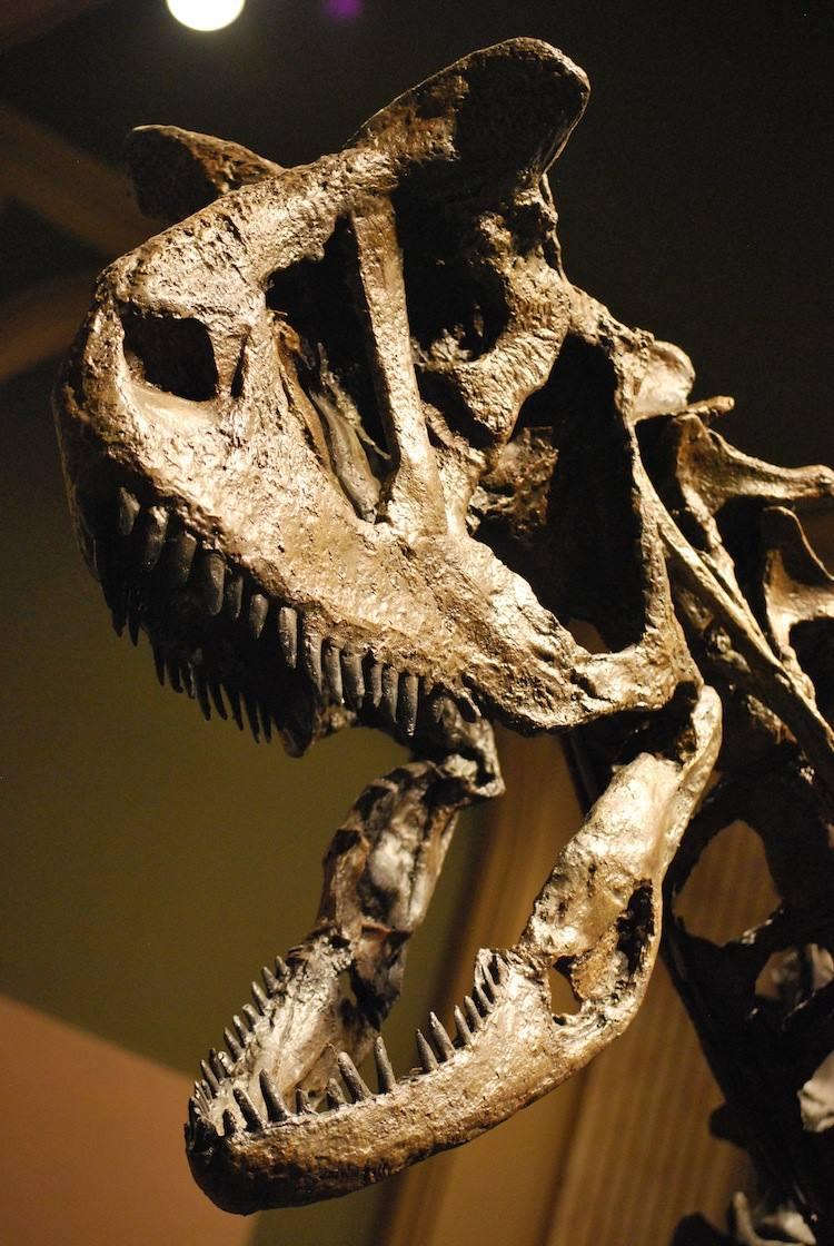 Weird Looking Dinosaurs Carnotaurus