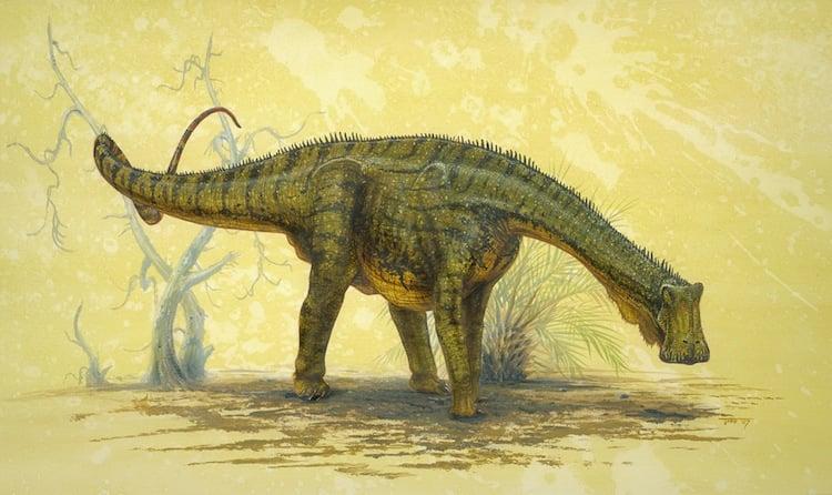 Nigersaurus taqueti Picture