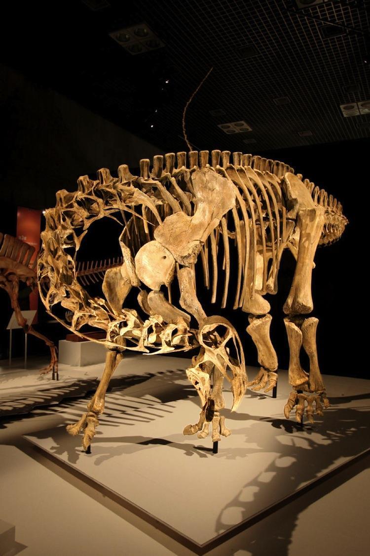 Bizarre Dinosaur Nigersaurus taqueti