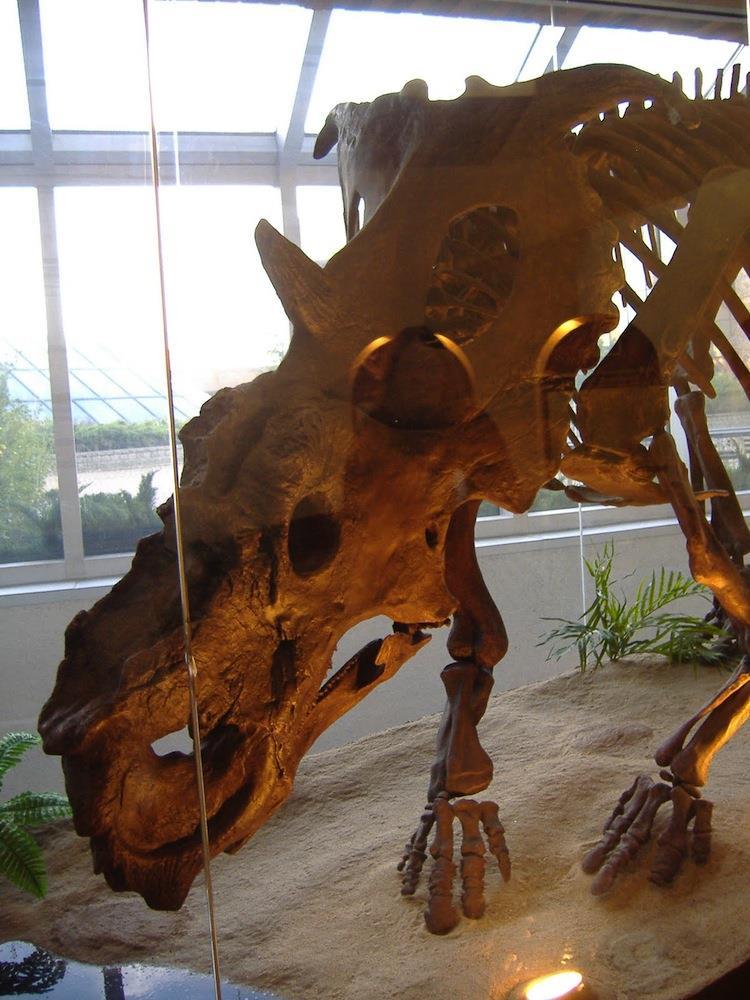 The Six Weirdest Dinosaurs