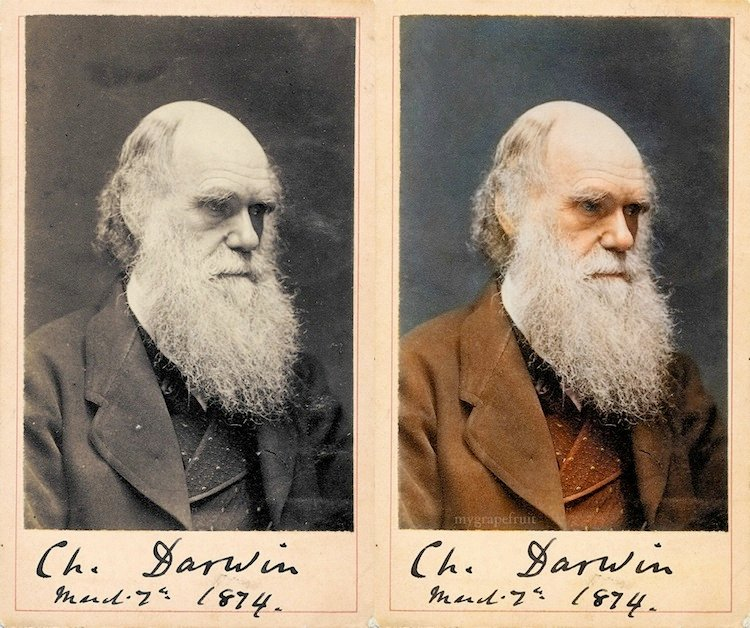 old-images-recolored3-charles-darwin