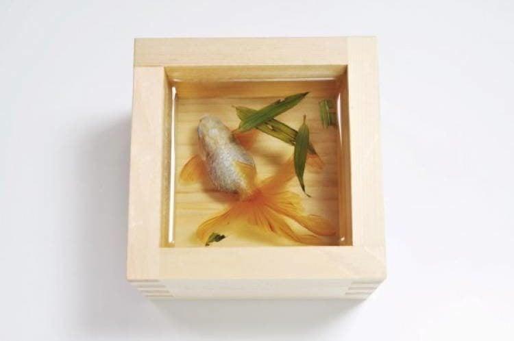 Fukahori Goldfish Salvation
