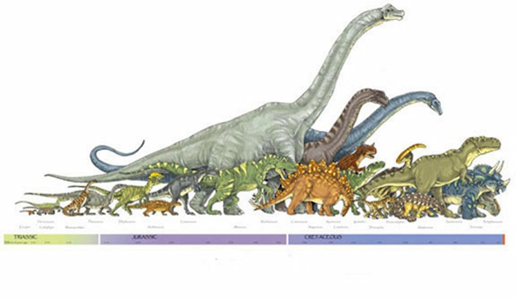 Craziest Dinosaur Facts Lifespan Timeline
