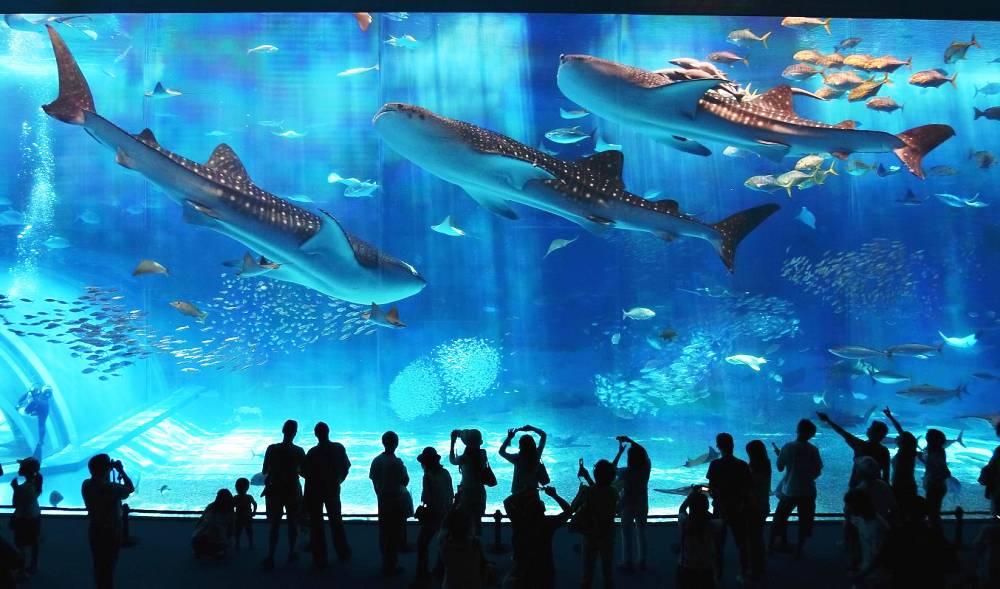 okinawa-aquarium-photograph.jpg