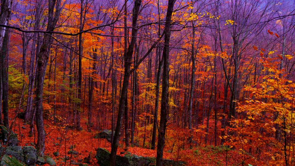 Catskill Forest In The Fall