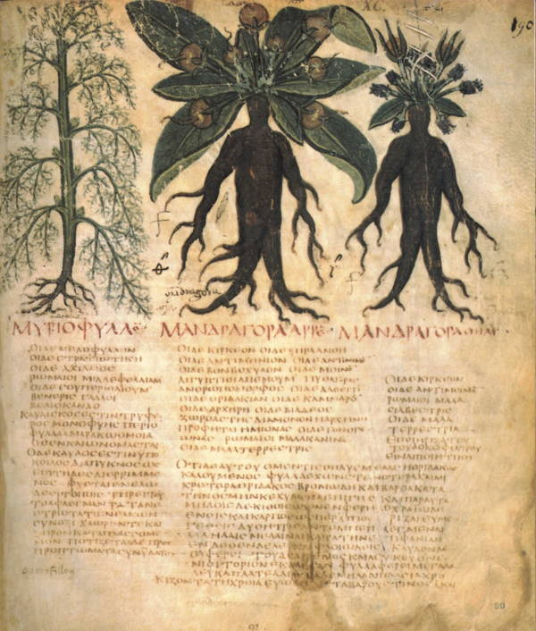 Painful Medical Procedures Of Medieval Times Dwale Recipe