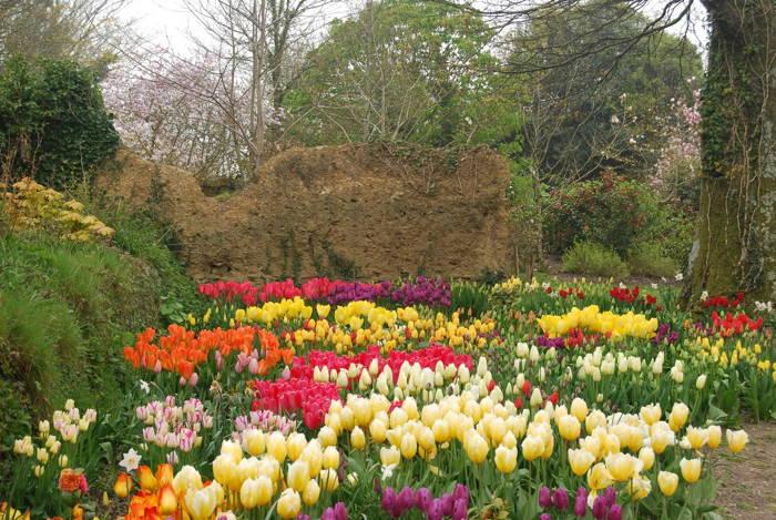 Heligan Garden
