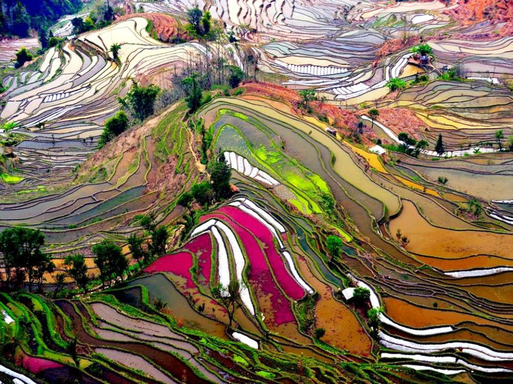 Yuan Yang Colored Rice Fields