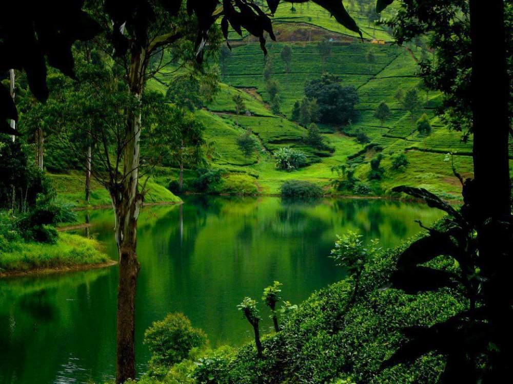 Lush Hills Of Sri Lanka