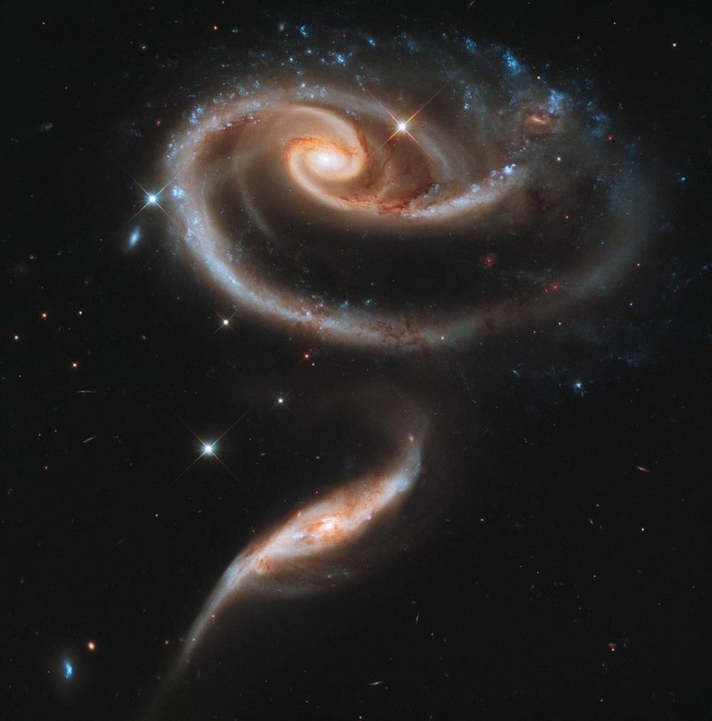 rose galaxies A Celestial Rose