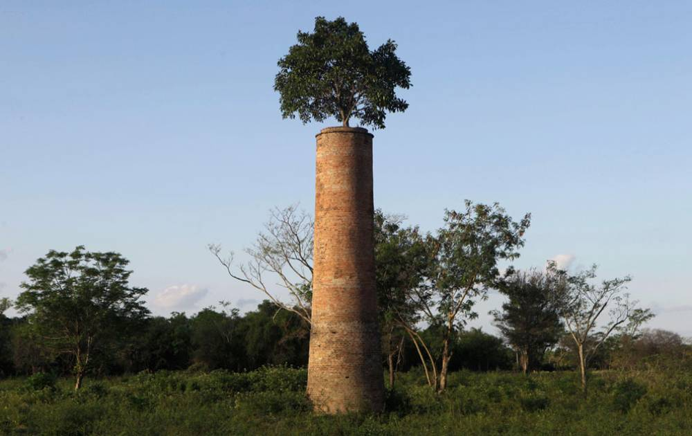 tree grows abandoned factory A Naturally Powerful Statement
