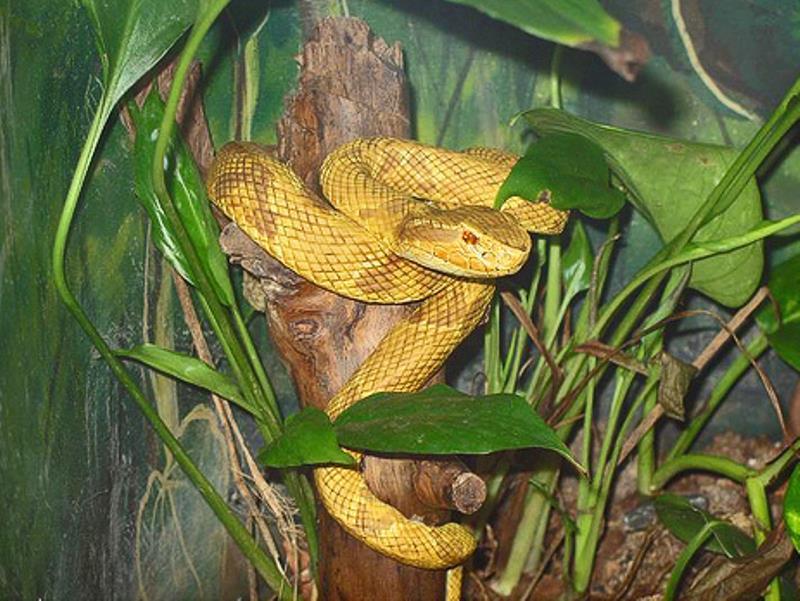 Snake Island Off Of Brazil