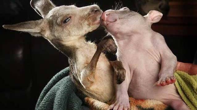 Best Of PBH 2012 Animal Friendships