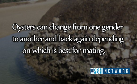 amazing facts ocean animals oyster gender