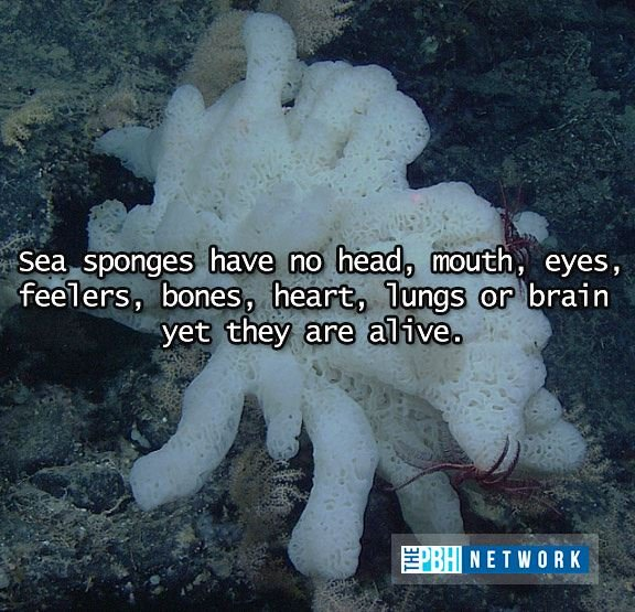 Facts About Sponges