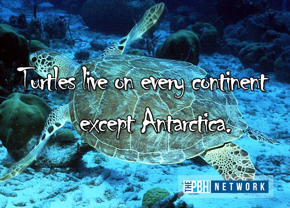 Facts About Ocean Animals