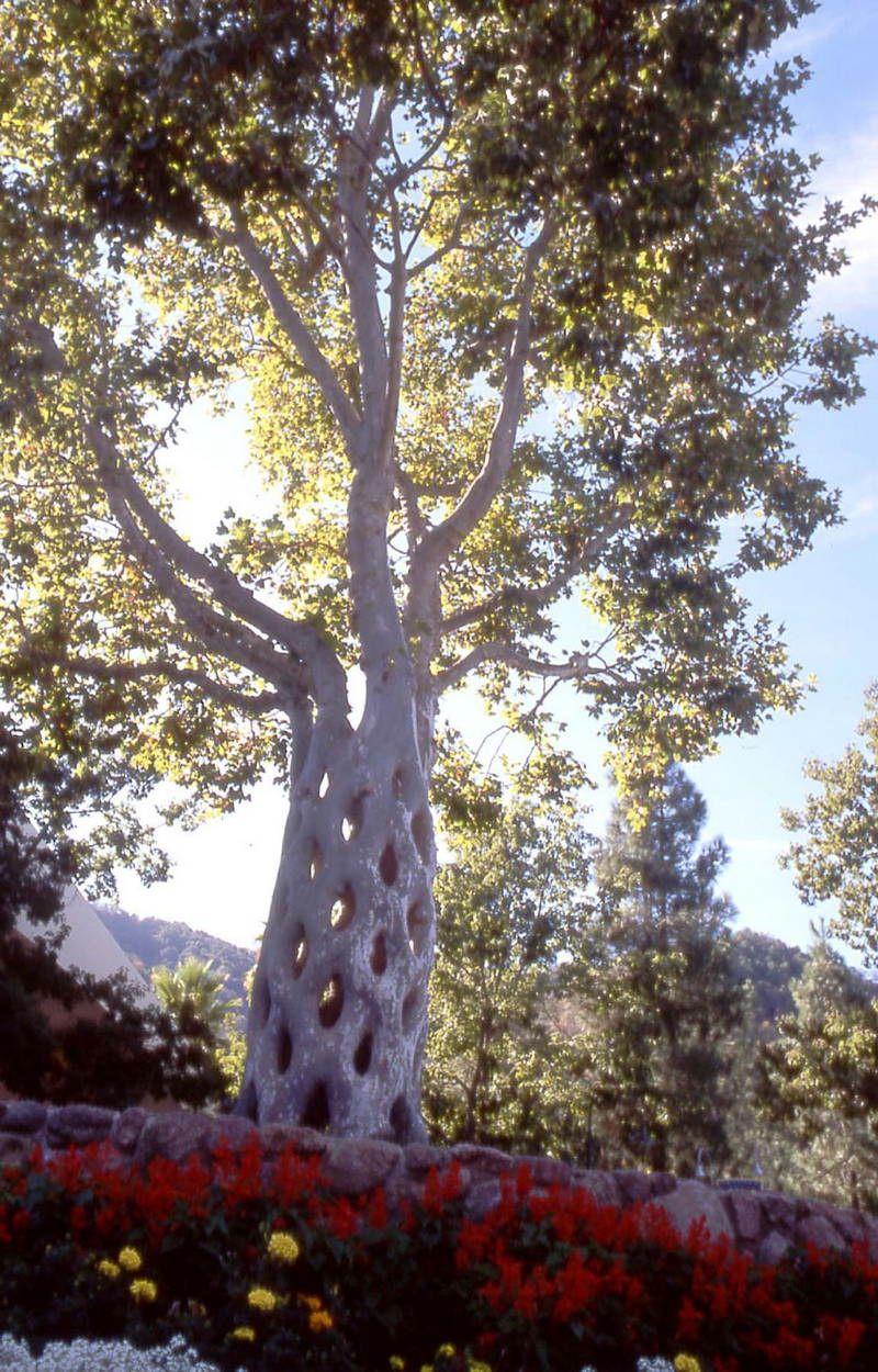 Interesting-Trees-Photos