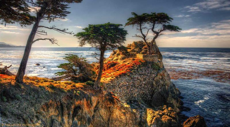 Most Amazing Trees Lone Cypress Photograph