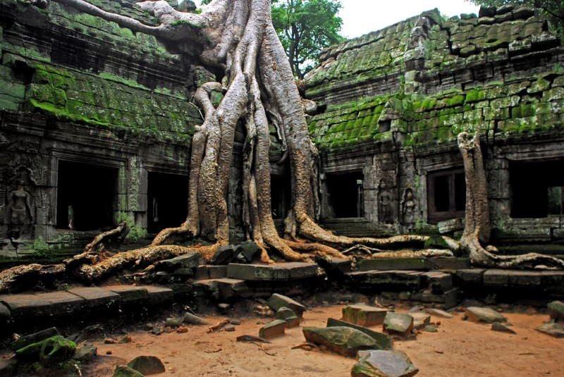 Nudifloras Trees