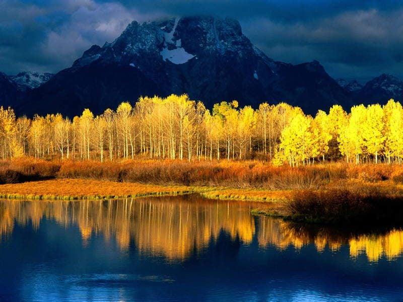 Quaking Aspen Tree Photograph