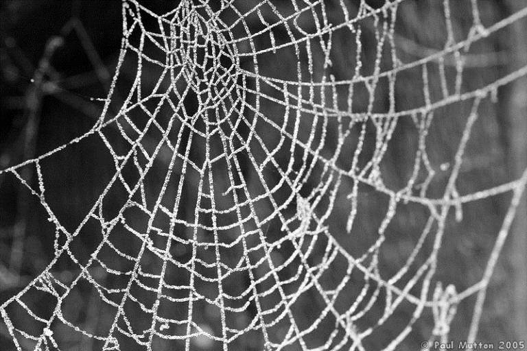Outrageous Historical Treatments Spider Webs 2