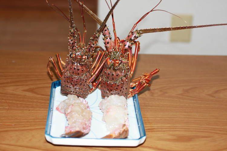 Bizarre Seafood Ikizukuri 2