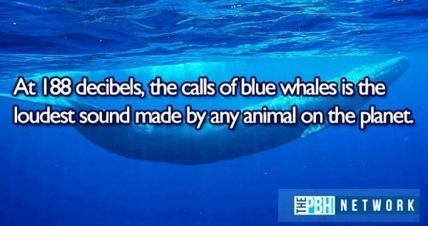 Ocean Animals Facts 10 Amazing Things About Marine Life