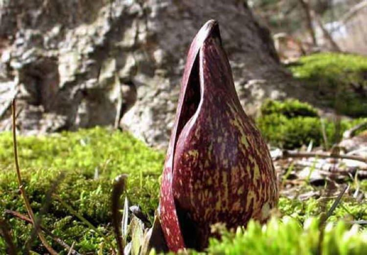 World's Largest And Smelliest Flowers
