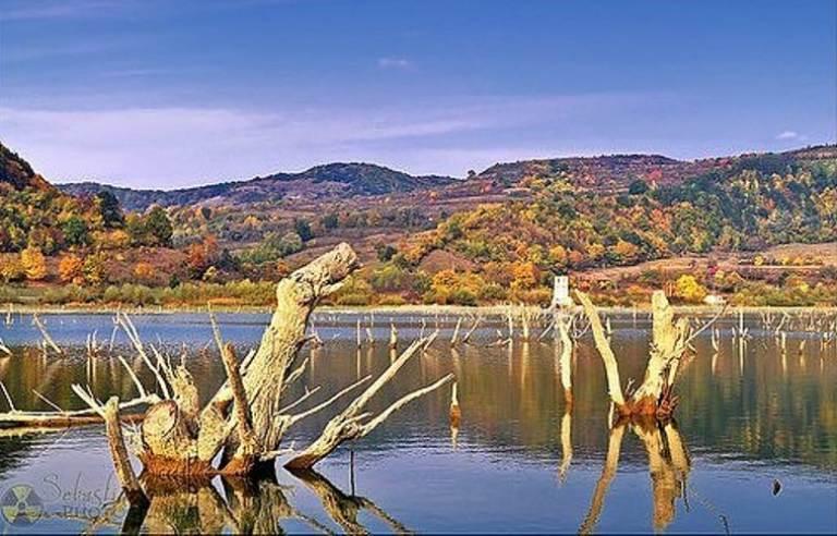 Sunken Forests Lake Bezid