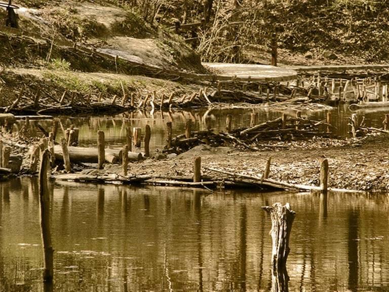 Amazing Sunken Forests Lake Bezid
